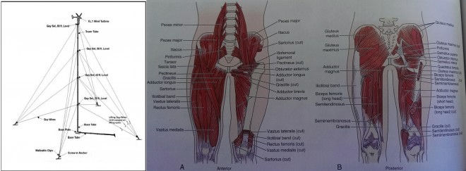 Like guy wires of a tower, your body's core muscles help to stabilize the spine and keep us upright.